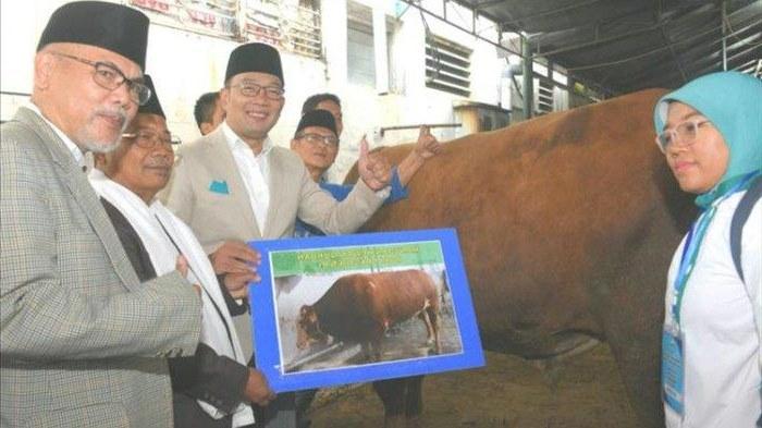 Design Baju Lebaran Ridwan Kamil D0dg Idul Adha Pertama Jadi Gubernur Ridwan Kamil Semoga
